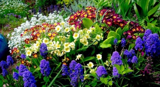 Choosing perennial flowers when planting in the country