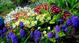 Выбирам многолетние цветы при посадке на даче