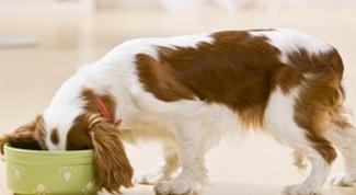 Как выбрать правильный корм для собаки