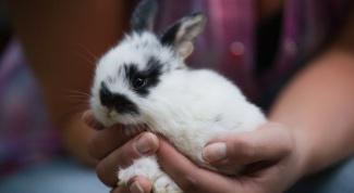 Как выбрать и купить декоративного кролика