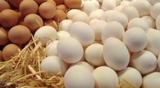 Яйцо куриное. Вред или польза?