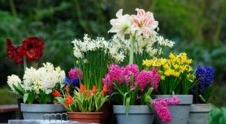 Как ухаживать за домашними растениями