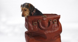 Правила перевозки домашних животных в поезде