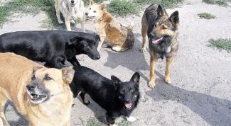 How to choose ultrasonic dog repeller