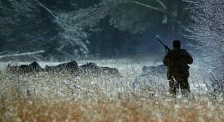 Как выбрать ружье для охоты на кабана