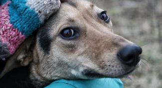 Как определить собаку в приют