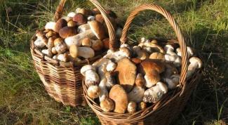 Как правильно собирать грибы в лесу