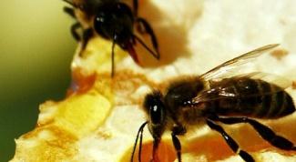 Лечебные свойства продуктов пчеловодства