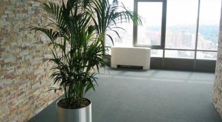 Как выбрать неприхотливое растение в офис