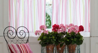 Правила выбора цветов для квартиры