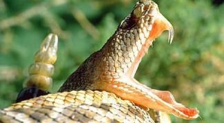 Как определить, ядовитая змея или нет