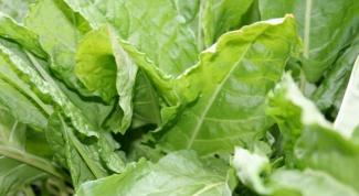 Как приготовить салат со щавелем