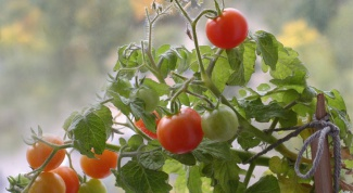 How to slow the growth of tomatoes