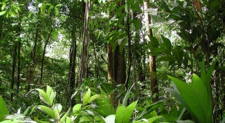 Кто обитает в вечнозеленых лесах