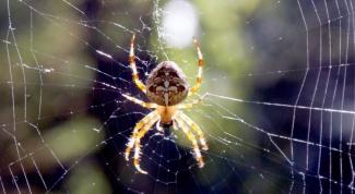 Где обитает паук-крестовик