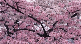 What do dreams about flowering trees