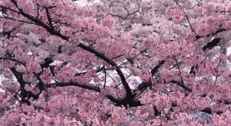 Что означают сны про цветущие деревья