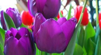 What symbolizes the color purple