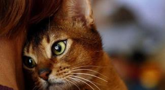 Что думают коты о людях
