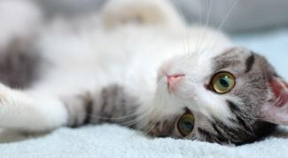 Как лечить колит у кошек