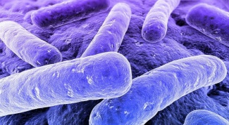 At what temperature kill harmful bacteria