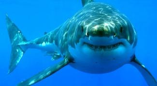 Пляжи мира без акул