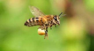 Как насекомые летают