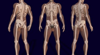 Какие непарные кости есть в человеческом организме