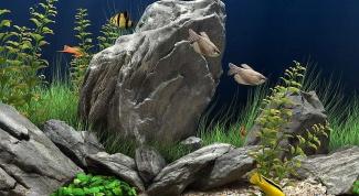 Надо ли менять воду, если одна из рыбок умерла