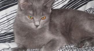 Почему кошки «топчут» передними лапками