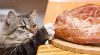 Можно ли кошкам есть человеческую пищу