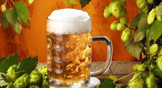 Как выбрать хорошее чешское пиво
