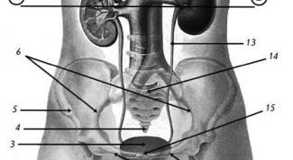 How to become a urologist