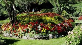 Какие садовые цветы растут в тени