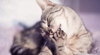 Как устроены лапы кошек
