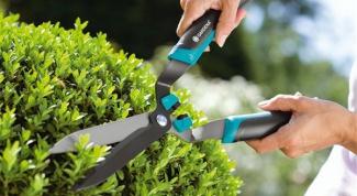 Немного об уходе за деревьями и кустарниками