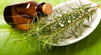Масло чайного дерева: применение и полезные свойства