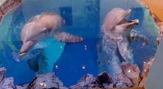 Декоративные наливные 3D полы