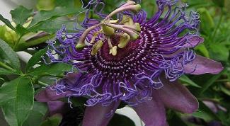 Как вырастить экзотический цветок дома