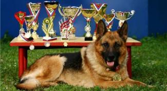 Что пишут в родословной собаки