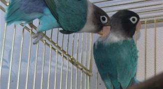 Советы по уходу за домашней птицей