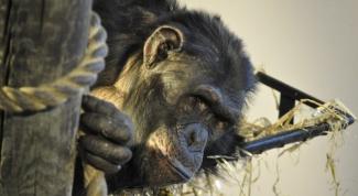 Какие документальные фильмы сняты про обезьян