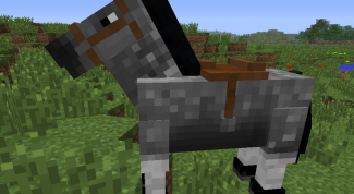 Where can you find horses in minecraft
