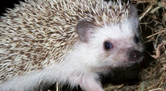 Where and how hedgehogs hibernate