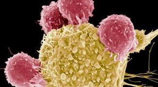 Чем отличается раковая клетка от нормальной