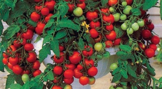 How to grow tomatoes in decorative pots