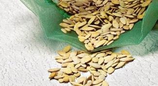 Когда и как замачивать семена огурцов