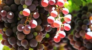 Как приготовить горячее вино от простуды