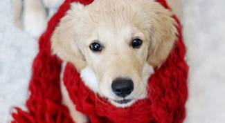 Как лечить бронхит у собак