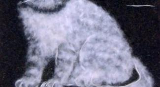 Как сделать панно из тополиного пуха с изображением котенка